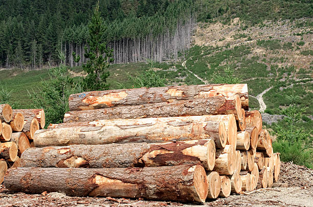Logging Industry: Forest Felling:スマホ壁紙(壁紙.com)