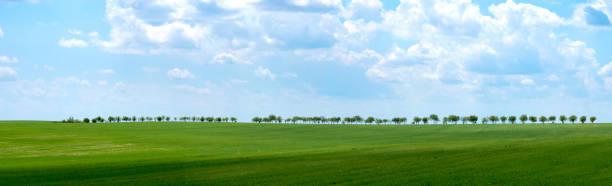 Summer rural landscape a panorama:スマホ壁紙(壁紙.com)