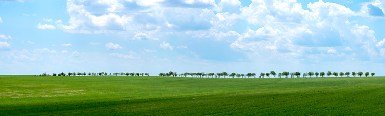 Oilseed Rape「Summer rural landscape a panorama」:スマホ壁紙(5)