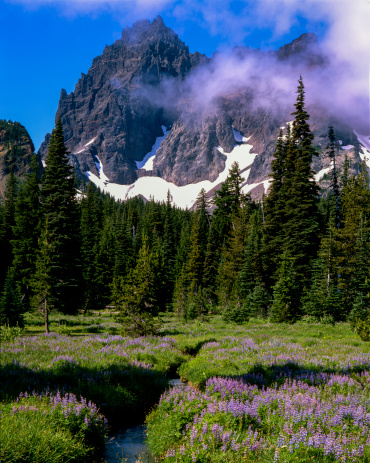 Willamette National Forest「Three fingered Jack and Canyon Creek Meadow」:スマホ壁紙(9)