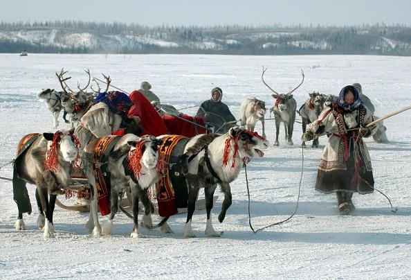 Reindeer Sledding「The Nenets - nomad tribes from Siberia」:写真・画像(0)[壁紙.com]