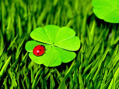 Ladybug「Double Luck」:スマホ壁紙(1)