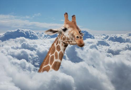 Giraffe「Giraffe neck coming out from clouds」:スマホ壁紙(2)