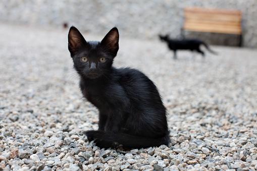 子猫「Skinny Black Cat on Gravel」:スマホ壁紙(9)