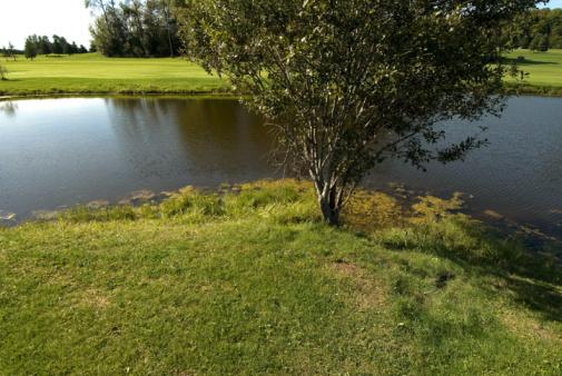 Golf Links「Water hazard on golf course」:スマホ壁紙(18)