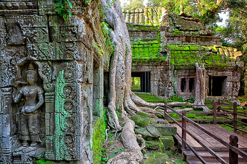 Ta Prohm Temple「Ta Phrom Temple and gigantic trees and roots」:スマホ壁紙(0)