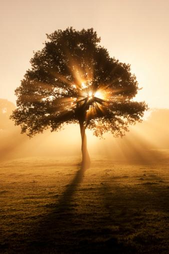 Single Tree「Misty tree」:スマホ壁紙(13)