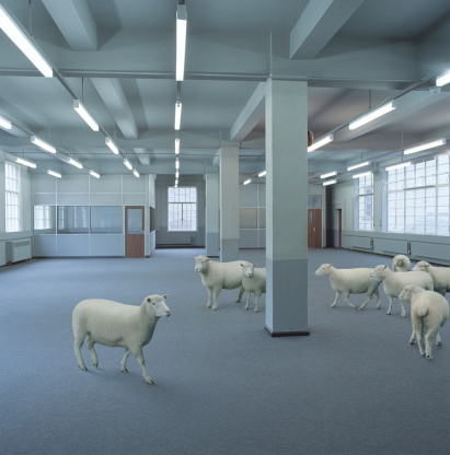 Sheep「Sheep in empty office (Digital Composite)」:スマホ壁紙(1)