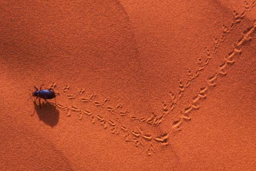 Beetle「Darkling beetle leaving tracks in sand, overhead view」:スマホ壁紙(4)