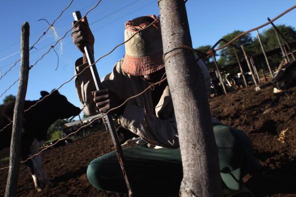 Farm「Nation Struggles to Feed Itself Following Land Reform」:写真・画像(0)[壁紙.com]