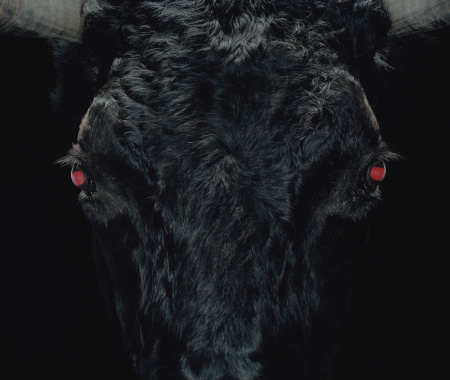 Red Bull「Bull with red eyes, close-up (Digital Enhancement)」:スマホ壁紙(3)