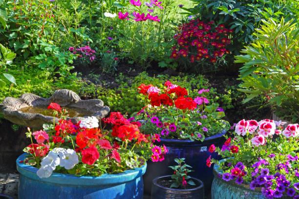 Patio pots and garden border full of colourful flowers.:スマホ壁紙(壁紙.com)