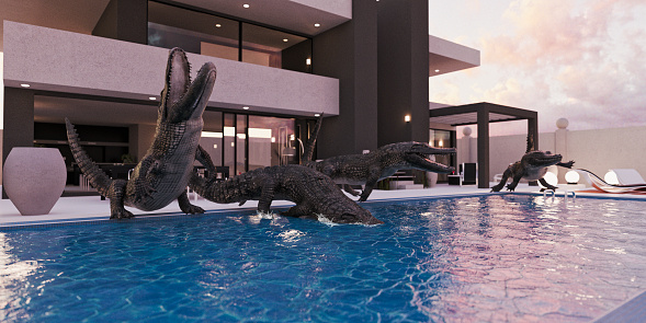 Crocodile「Crocodiles in luxury swimming pool」:スマホ壁紙(4)