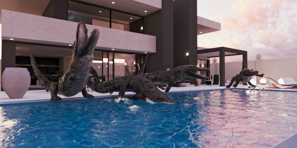 Crocodiles in luxury swimming pool:スマホ壁紙(壁紙.com)