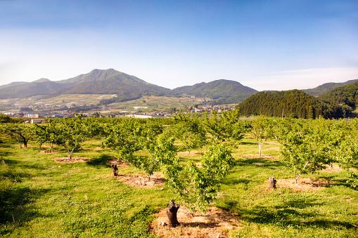 月「日本長野県山の果樹園」:スマホ壁紙(3)