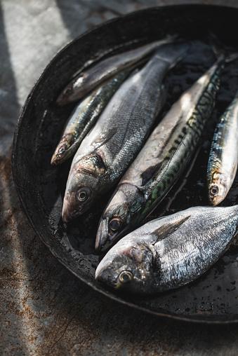 Sea Bream「Raw fish, Sea bream, sea bass, mackerel and sardines in pan」:スマホ壁紙(6)