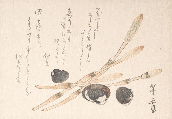 Animal Body Part「Tsukushi Plant And Shijimi Shells. Creator: Uematsu Toshu.」:写真・画像(9)[壁紙.com]