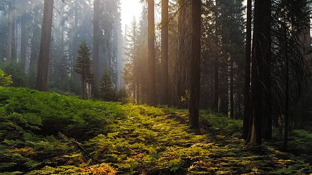Sequoia National Park, Hume, California, Usa:スマホ壁紙(壁紙.com)