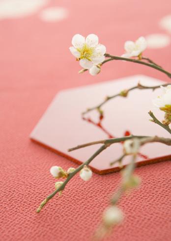 梅の花「Japanese apricot」:スマホ壁紙(3)