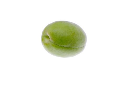 梅「Japanese apricot」:スマホ壁紙(9)