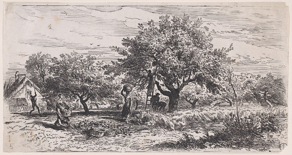 Agricultural Activity「Picking Fruit From Tree Outside Cottage」:写真・画像(4)[壁紙.com]