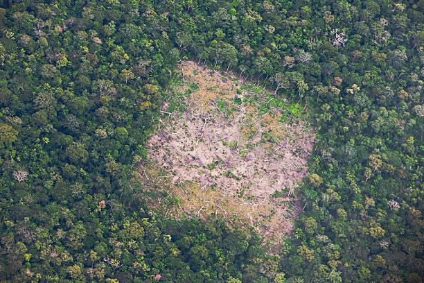 Aerial of Amazon rainforest destruction:スマホ壁紙(壁紙.com)