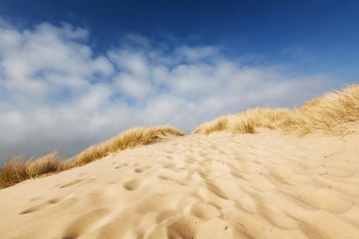 Wilderness Area「Coast Footprints」:スマホ壁紙(17)