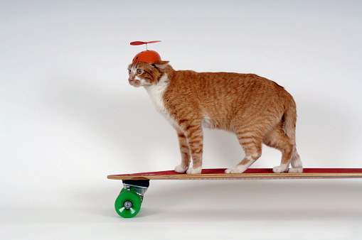 Skating「Cat with Beanie Riding Skateboard」:スマホ壁紙(15)
