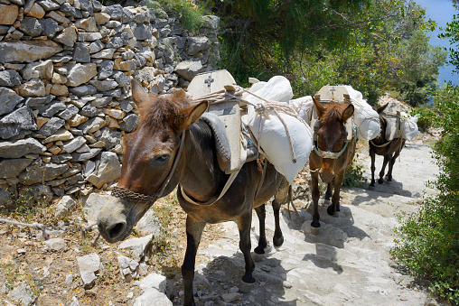 Mt Athos Monastic Republic「Greece, Chalkidiki, Mount Athos, World Heritage site, Mule caravan near Skete (monastic settlement)」:スマホ壁紙(18)