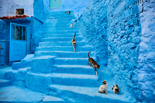 Morocco「Morocco, Chefchaouen town, the blue city, street cat」:スマホ壁紙(15)
