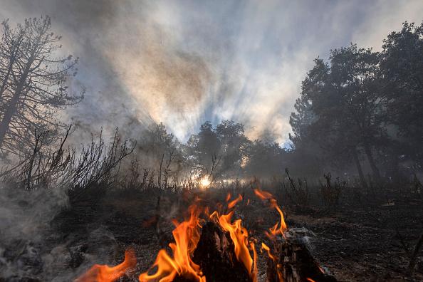 San Bernardino National Forest「Apple Fire In Southern California Forces Evacuations」:写真・画像(2)[壁紙.com]