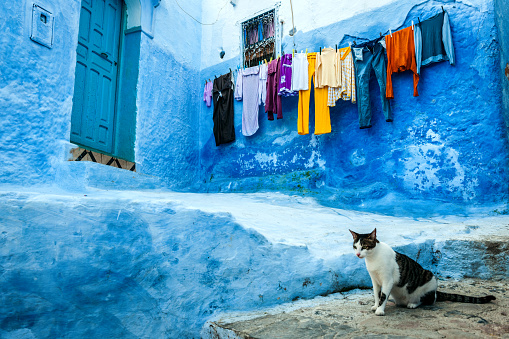 Kitten「Drying clothes on the streets Chefchaouen, Morocco,North Africa」:スマホ壁紙(2)