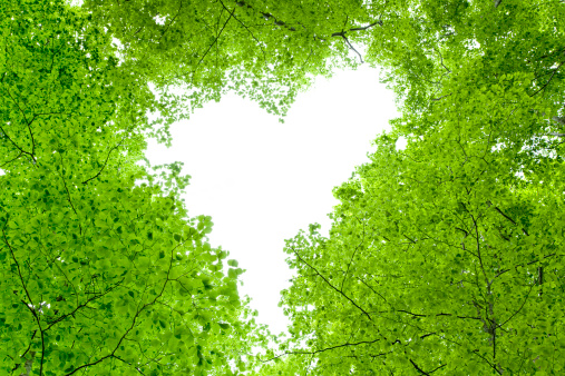 ハート「Love Heart in Tree Canopy」:スマホ壁紙(10)