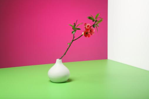 カリン「Chaenomeles twig in flower vase」:スマホ壁紙(4)