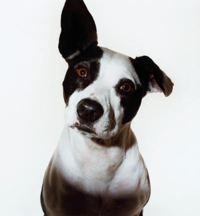 Animal Ear「Dog With One Ear Raised」:スマホ壁紙(10)