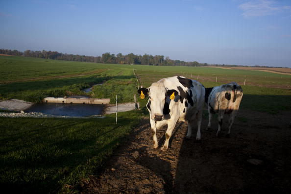 Florida - US State「U.S. Dairy Farming Still A Struggle Despite Rise In Milk Prices」:写真・画像(2)[壁紙.com]