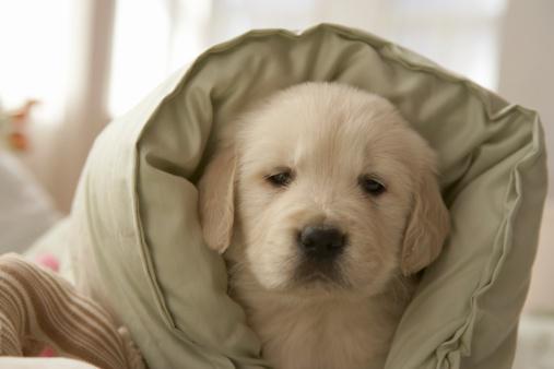 Duvet「Pillow around dog」:スマホ壁紙(7)