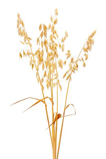 Crop - Plant「Oat」:スマホ壁紙(16)