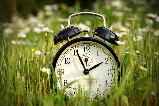花畑「自然の目覚まし時計」:スマホ壁紙(9)