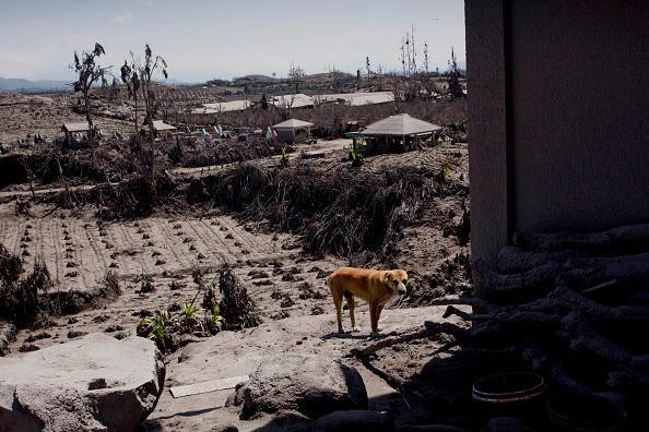 Active Volcano「Villages Left Devastated By Mount Sinabung Eruptions」:写真・画像(12)[壁紙.com]