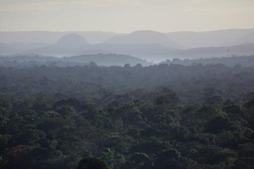 Amazon Rainforest「Misty Amazon rainforest landscape, Venezuela」:スマホ壁紙(12)