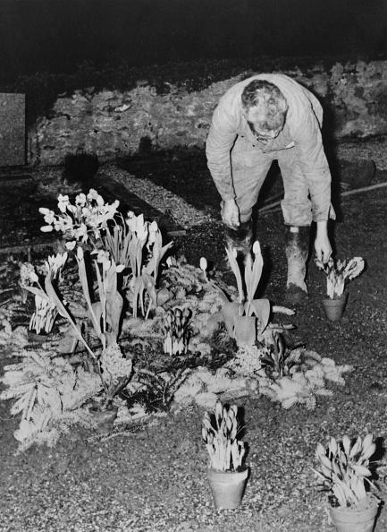 Grave「Chaplin's Grave Desecrated」:写真・画像(12)[壁紙.com]