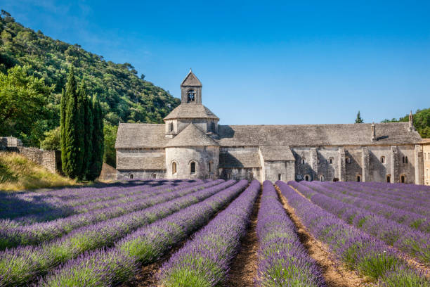 Sénanque Abbey with lavender fields:スマホ壁紙(壁紙.com)