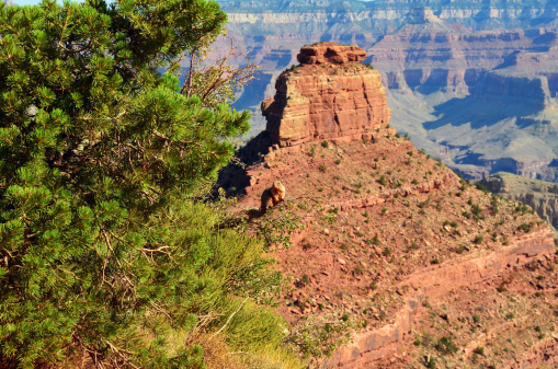 Kaibab National Forest「Grand Canyon Squirrel Oneill Butte South Kaibab Trail」:スマホ壁紙(4)