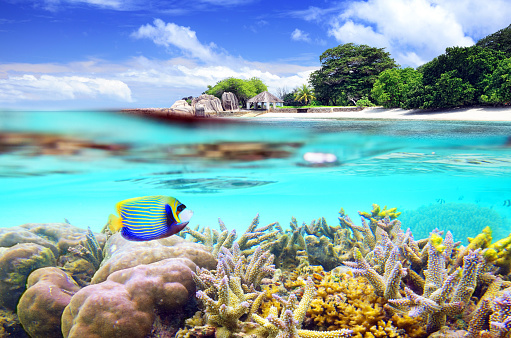 Snorkeling「Split shot of tropical paradise」:スマホ壁紙(2)