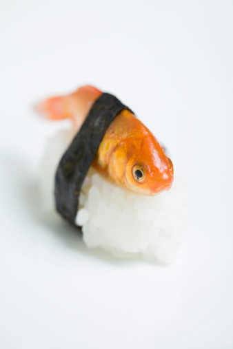 Frowning「Goldfish prepared as nigiri sushi, close-up」:スマホ壁紙(13)