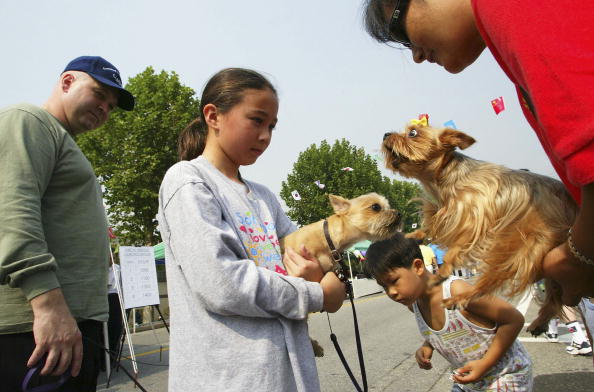 Domestic Animals「US and South Korean Forces Hold Command Organization Day」:写真・画像(14)[壁紙.com]
