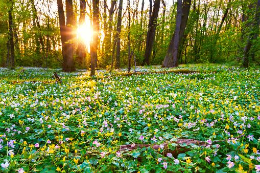 Fairy Tale「Wild flowers in evening light」:スマホ壁紙(7)