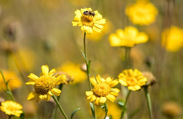 花畑「British Wild Flowers Blooming In Staffordshire」:写真・画像(18)[壁紙.com]
