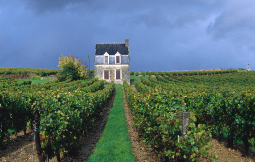 Loire Valley「House in a vineyard, Loire Valley, Chinon, Centre, France, Europe」:スマホ壁紙(12)